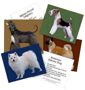 dog breed flashcards
